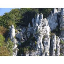 Zwiedzanie Ojcowskiego PN + Jaskinia Łokietka i Ciemna